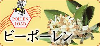sozai_orange