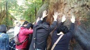 伊勢神宮の木のパワー